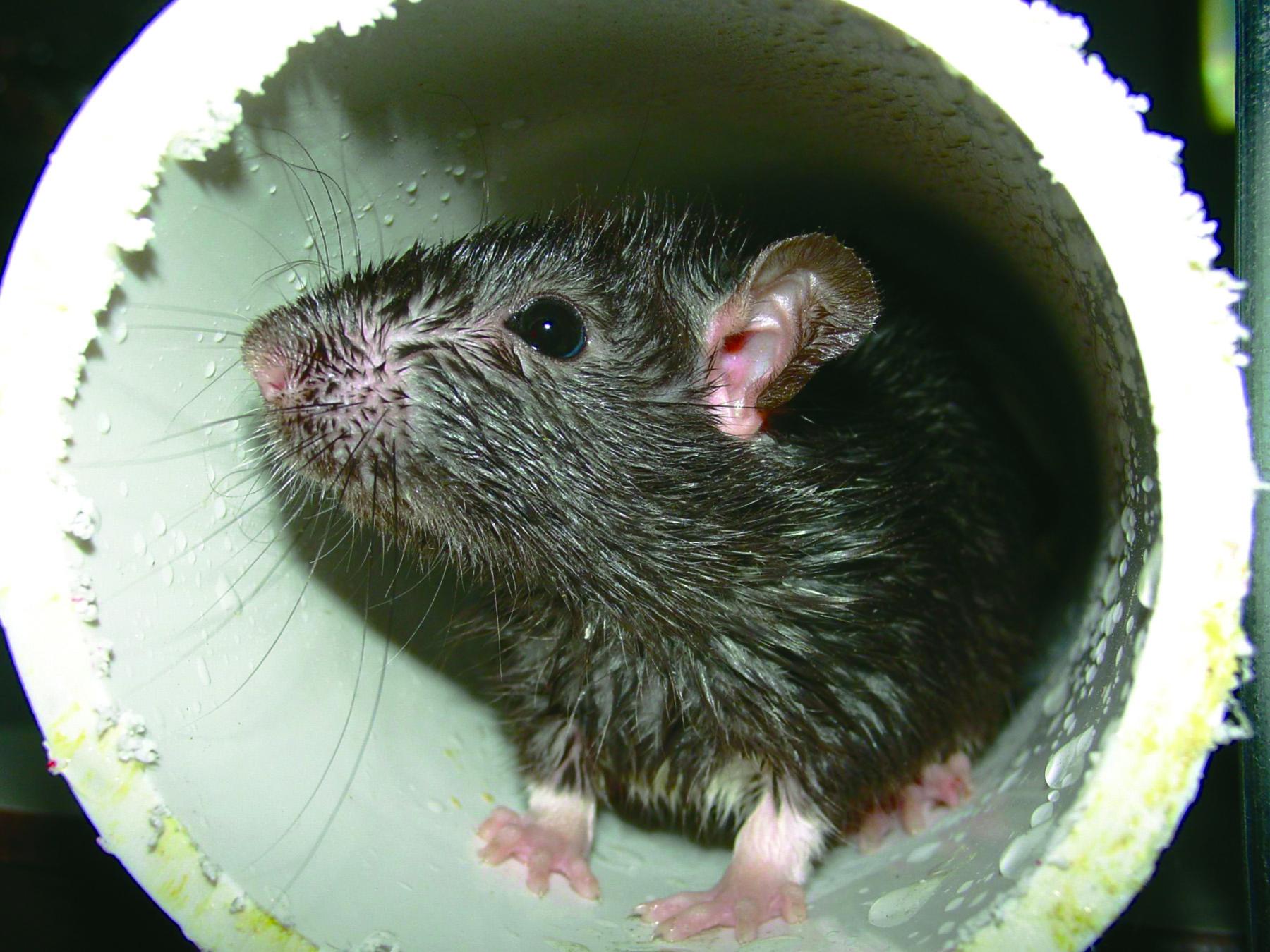 прекрасным кучи нарыла крыса фото период учёбы